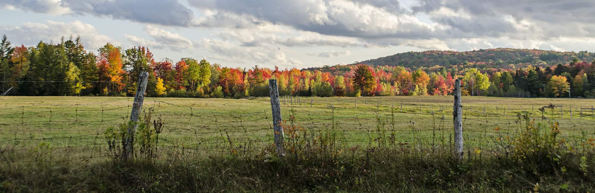 eastman champ montagne automne